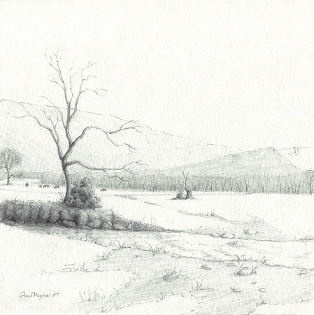 Cattle in Winter - Original Graphite Drawing by Paul Keysar
