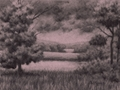 Through the Trees, Original Charcoal Drawing by Paul Keysar