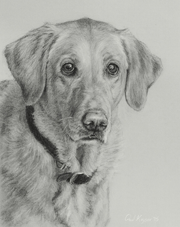 Jax - Traditional Realism charcoal pet portrait by Paul Keysar